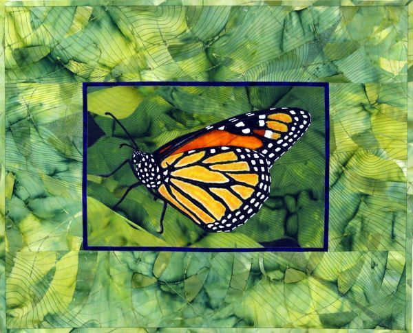 Monarch; large