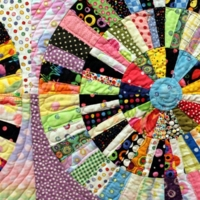 Close-up of Polka Daisey's